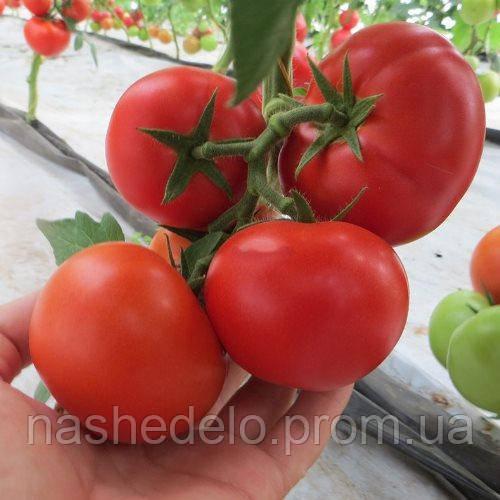 Целестин Ф1 250 с. томат Clause