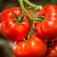 Семена томата Биф  Оазис F1 250 сем