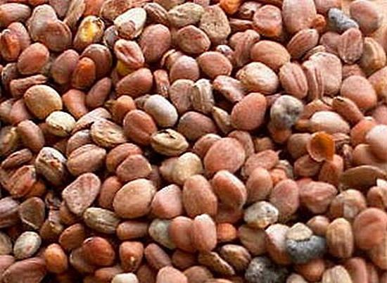 Семена редиса