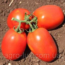 Семена томата Галилея F1 1000 сем Hazera / Хазера