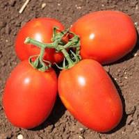 Семена красного томата сливки Галилея F1 1000 сем Hazera / Хазера