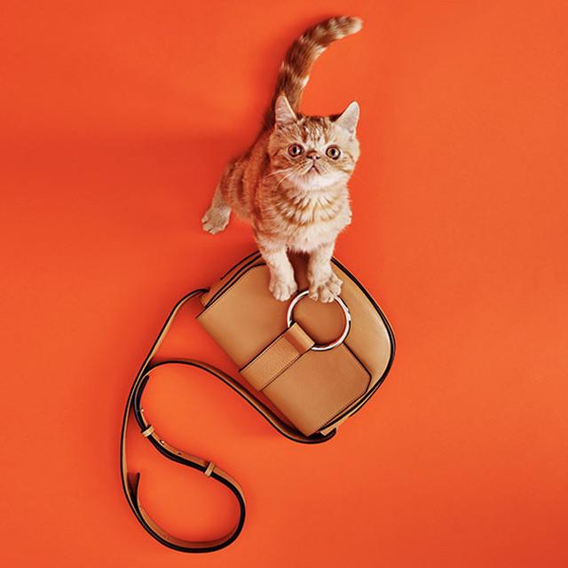 Рыжий кот с сумочкой через плечо Coccinelle Cross Body Bag