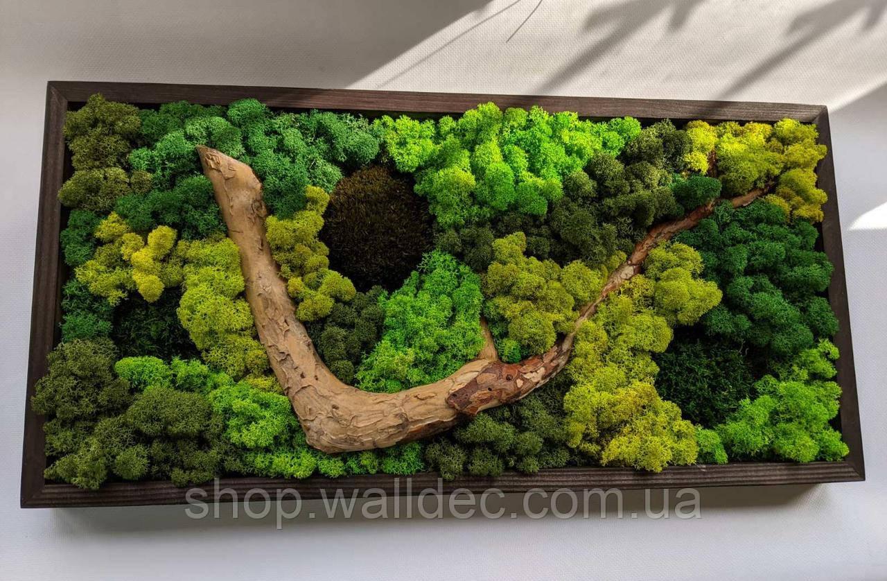 Картина из скандинавского мха (ягель) с деревом.