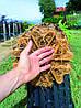 Горшок Nuova Pasquini & Bini S.p.a. Antispiralling Roots 7,5 л 26х22 см, фото 2