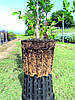 Горшок Nuova Pasquini & Bini S.p.a. Antispiralling Roots 7,5 л 26х22 см, фото 4