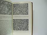 Самсонов В.А. Опухоли и опухолевидные образования предстательной железы (б/у)., фото 6