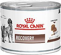 Royal Canin Recovery Canine Feline вологий, 195 гр
