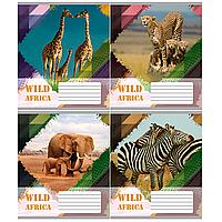 /Тетрадь 18л (линия) 2428л Животные Африки