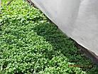 Агриспан 30 білий 9,5*50, фото 7