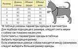 Зимовий комбінезон для такс Dog Вomba Корал №3 (450мм/400мм/360мм), фото 2