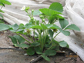 Агриспан 23 белый 9,5*100, фото 3