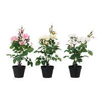 """IKEA """"ФЕЙКА"""" Искусственное растение в горшке, Роза различные растения, 12 см"""
