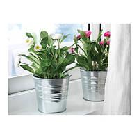"""IKEA """"ФЕЙКА"""" Искусственное растение в горшке, Маргаритка многолетняя разные цвета, 12 см"""