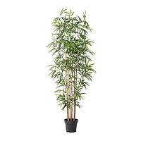 """IKEA """"ФЕЙКА"""" Искусственное растение в горшке, бамбук, 21 см"""