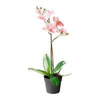 """IKEA """"ФЕЙКА"""" Искусственное растение в горшке, Орхидея розовый, 9 см"""