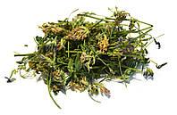 Люцерна посевная трава