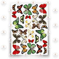 Печать съедобного фото - Бабочки №4
