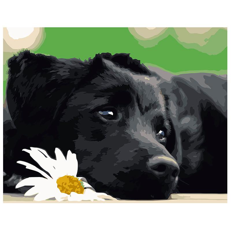"""Картина по номерам """"Черный щенок"""" VA-0518, 40 - 50 см"""
