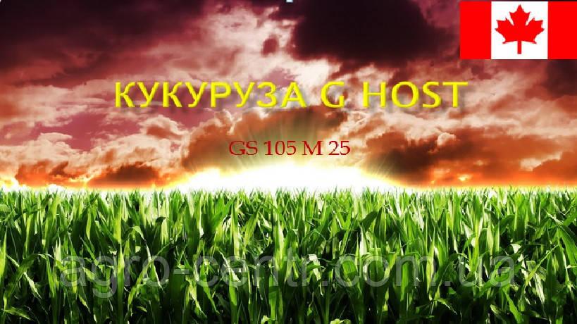 Семена кукурузы G Host GТ 110 N29 (Джи Хост)