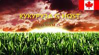 Семена кукурузы G Host GS 105 M25 (Джи Хост) ФАО 250