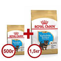 Royal Canin Yorkshire Puppy 1,5 кг+0,5кг корм для цуценят породи йоркширський тер'єр віком до 10 місяців