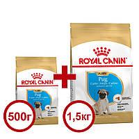 Royal Canin Pug Puppy 1,5 кг +0,5кг  корм для цуценят мопс