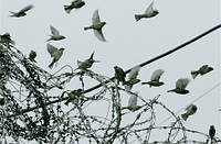 Амнистия 2016: как выйти на свободу? Советы уголовного адвоката