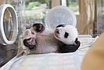 """Экскурсионный тур в Китай """"Круиз, гигантский Будда и панды"""" на 14 дней / 13 ночей, фото 3"""