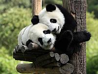 """Экскурсионный тур в Китай """"Круиз, гигантский Будда и панды"""" на 14 дней / 13 ночей"""
