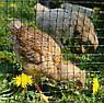 Сетка вольерная для птиц зеленая, ячейка 22мм x 35мм, рулон 0.5м x 100м, фото 5