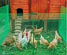 Сетка вольерная для птиц зеленая, ячейка 22мм x 35мм, рулон 1м x 50м, фото 6