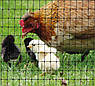 Сетка вольерная для птиц зеленая, ячейка 22мм x 35мм, рулон 1м x 50м, фото 7