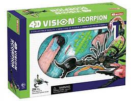 Объемная анатомическая модель 4D Master Скорпион 26113, КОД: 2433841