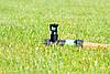 Дощуватель Presto-PS статичний Куб 3 на ніжці (2941), фото 10