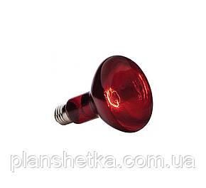 Лампа инфракрасная Tehnomur R80  цвет стекла красный 100 Вт, фото 2