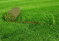 Газон рулонный, создание газонов (рулонный газон Киев)