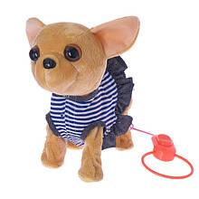 Іграшкова собачка на повідку CL1349AB на дистанційному управлінні (В смугастому сукні)