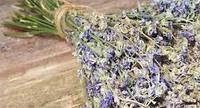 Синяк трава сушеная 50 гр