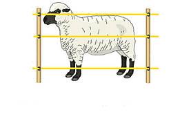 Електропастух для овець 12/220 V. Під дерев'яний стовпчик(комплект на 300 м.)