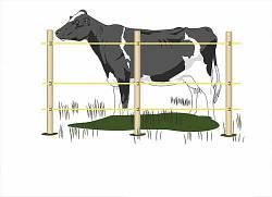 Електропастух для корів 9/12 V. Під дерев'яний стовпчик(комплект на 300 м.)