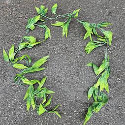 Лиана рускус  зеленый 180 см