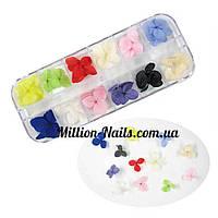 Набор сухоцветов в контейнере для декора ногтей., фото 1