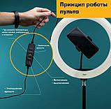Кольцевая Led лампа S31, управление на проводе, питание usb, диаметр 33 см, Селфи кольцо, фото 6