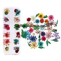 Набор сухоцветов в контейнере для декора ногтей.(цветы с листьями)