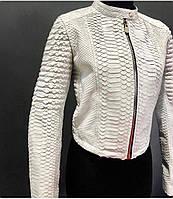 Куртка шкіряна з пітона, комір стійка, фото 1