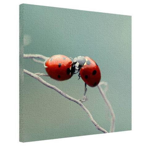 Картина на тканини, 50х50 см сонечка, фото 2