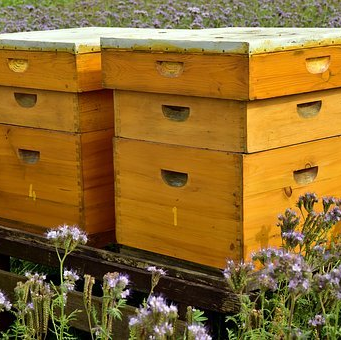 Улья для пчёл, апитерапия
