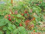 Сітка захисна від птахів 4х5 (Італія) ОРТОФЛЕКС, фото 2
