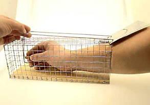 Крысоловки-клетки живоловящие Chomik, 2 штуки, фото 2