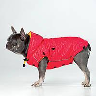 Одежда для собак, Жилет Neon Ici /девочка/ для французского бульдога, мопса. Neon Icy